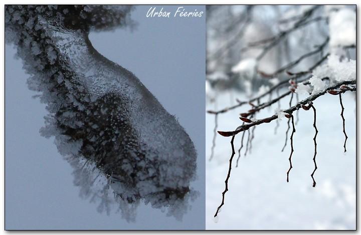 Bijoux glacés de l'hiver 2.jpg